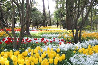 青島亜熱帯植物園「真冬のフラワーショー」
