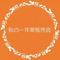 季節の花壇販売(秋)ポップ