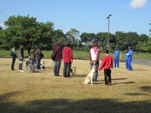 犬のマナー教室4