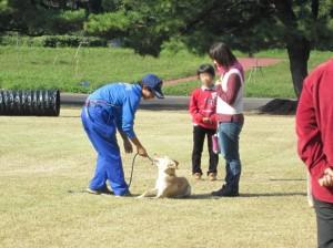 犬のマナー教室嫌がる犬1