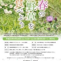 H30.4 春の山野草を食べようA4チラシout