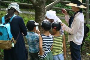 昆虫観察会
