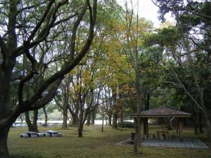 トチノキ (2)