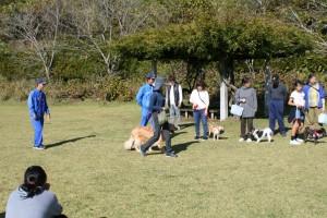 犬のマナー教室6