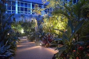 ライトアップ大温室