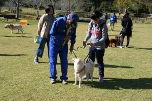 犬のマナー教室3
