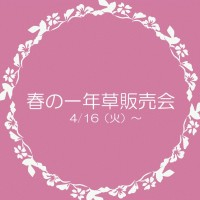 季節の花壇販売(春)ポップ